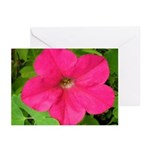 Pink Lady Petunia Greeting Cards (Pk of 10)