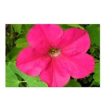 Pink Lady Petunia Postcards (Package of 8)