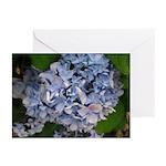 Blue Boy Hydrangeas Greeting Cards (Pk of 20)