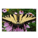 Butterfly Echinacea Postcards (Package of 8)