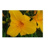 Golden Girl Lilies Postcards (Package of 8)