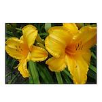 Sunburst Lilies Postcards (Package of 8)
