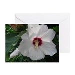 Rose of Sharon Greeting Cards (Pk of 20)