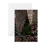 Spring Moss Greeting Cards (Pk of 20)