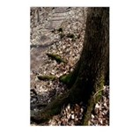 Roots of the Forest Postcards (Package of 8)