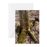 First Signs of Spring Greeting Cards (Pk of 20)