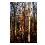 Autumn Arrival Postcards (package Of 8)