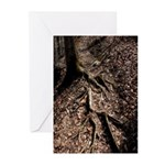 Tree Roots, Don't Trip Greeting Cards (Pk of 10)