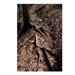 Tree Roots, Don't Trip Postcards (Package of 8)