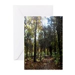 Hike the Woods Greeting Cards (Pk of 20)