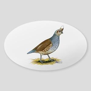 Texas Scaled Quail Sticker