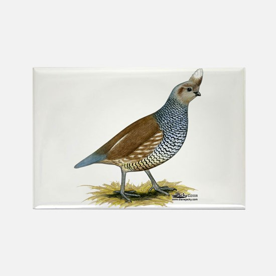 Texas Scaled Quail Magnets