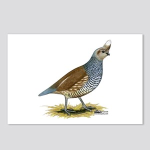 Texas Scaled Quail Postcards (package Of 8)