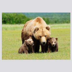A Brown Grizzly Bear With Cubs; Alaska, United Sta