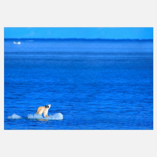 Polar Bear Standing On A Piece Of Floating Ice