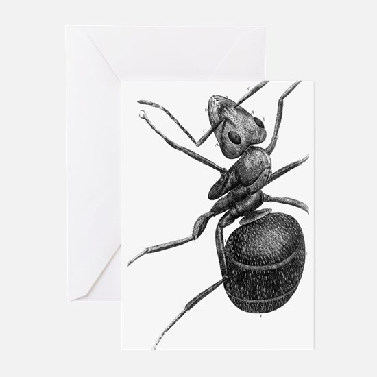 Ant, 17th Century artwork Greeting Cards