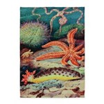 Sea Creatures Starfish 5'x7'area Rug