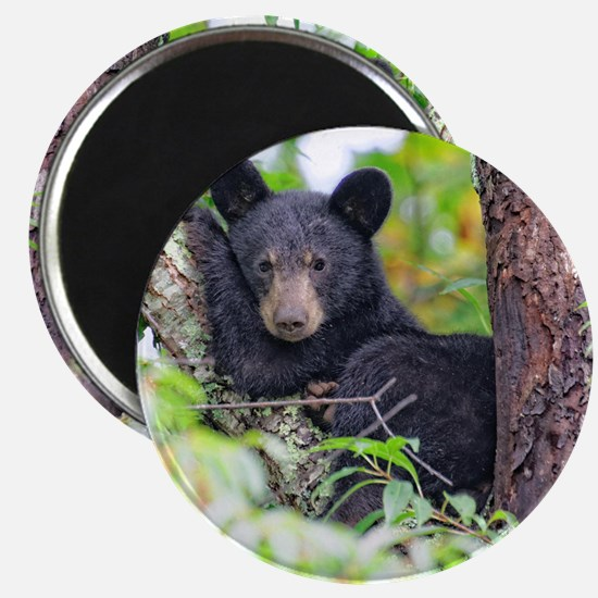 Bear Cub relaxing in Tree Magnets