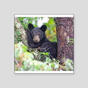 Bear Cub relaxing in Tree Sticker