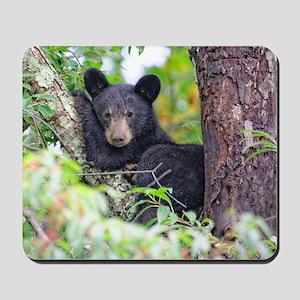 Bear Cub relaxing in Tree Mousepad