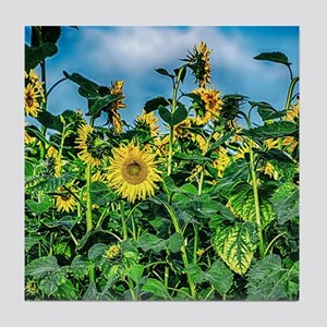 Sunflower Field Tile Coaster