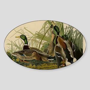 Audubon Mallard duck Bird Vintage Print Sticker