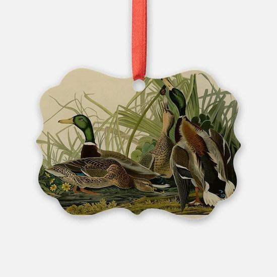Audubon Mallard duck Bird Vintage Print Ornament