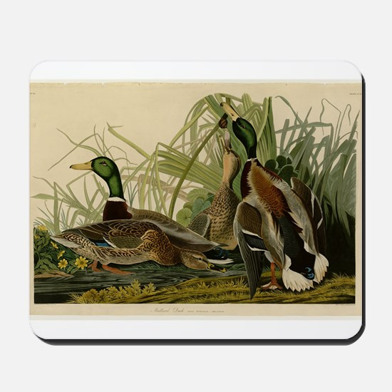 Audubon Mallard duck Bird Vintage Print Mousepad