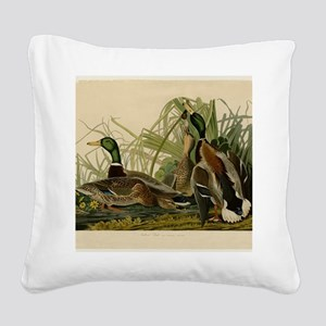 Audubon Mallard duck Bird Vintage Print Square Can