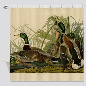Audubon Mallard duck Bird Vintage Print Shower Cur