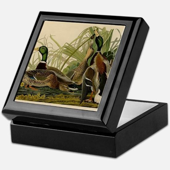Audubon Mallard duck Bird Vintage Print Keepsake B