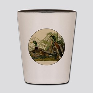 Audubon Mallard duck Bird Vintage Print Shot Glass