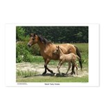 Marsh Tacky Horses Postcards (Package of 8)