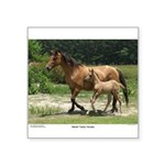 Marsh Tacky Horses Sticker