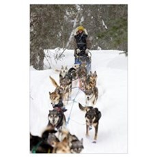Bill Pinkham On The Trail In A Heavy Snowfall Poster