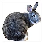 American Chinchilla Rabbit Square Car Magnet 3