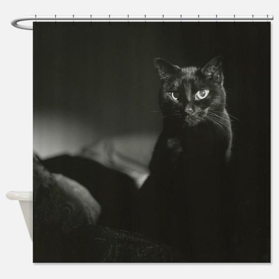 Cat photos Shower Curtain