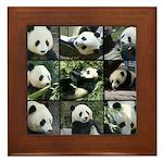 Bear collage Framed Tile