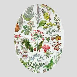 Botanical Illustrations - Larousse P Oval Ornament