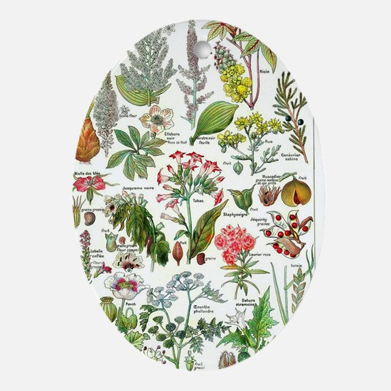 Botanical Illustrations - Larousse P Oval Ornament