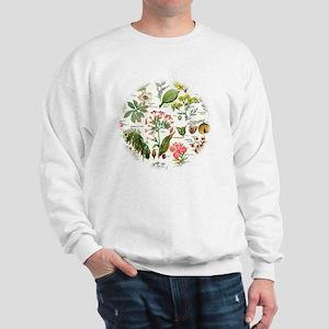 Botanical Illustrations - Larousse Plan Sweatshirt