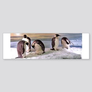 Penguins from Antarctica Photo Bumper Sticker