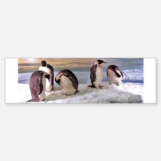 Penguins from Antarctica Photo Bumper Bumper Bumper Sticker