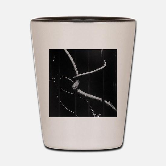Cute 10x10 Shot Glass