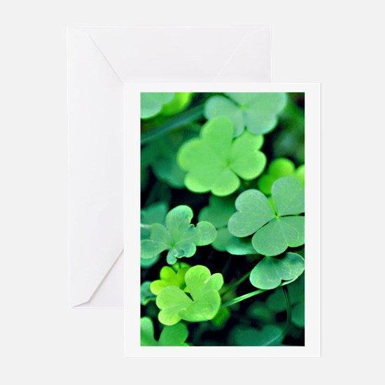 luckyClover camara Greeting Cards (Pk of 10)