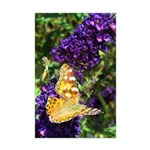 Peacock Butterfly on Purple sq Posters