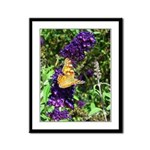 Peacock Butterfly on Purple sq Framed Panel Print
