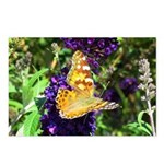 Peacock Butterfly on Purple sq Postcards (Package
