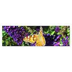 Peacock Butterfly on Purple sq Bumper Sticker