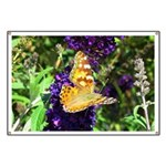 Peacock Butterfly on Purple sq Banner